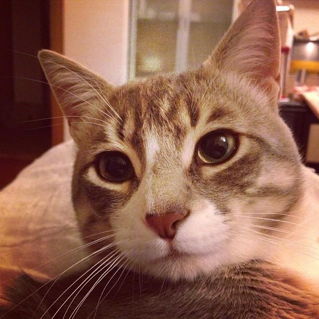 My name is Golia  #cat #pet #hipstamatic #picoftheday #instagood #photooftheday #instamood #iphonesia #instaitalia  #igersardegna #igersitalia #poldo_